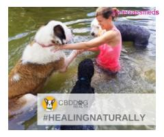 #CBD DOG HEALTH#